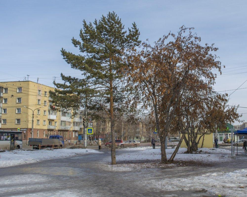 18 марта 009 2 дерева уменьш.jpg